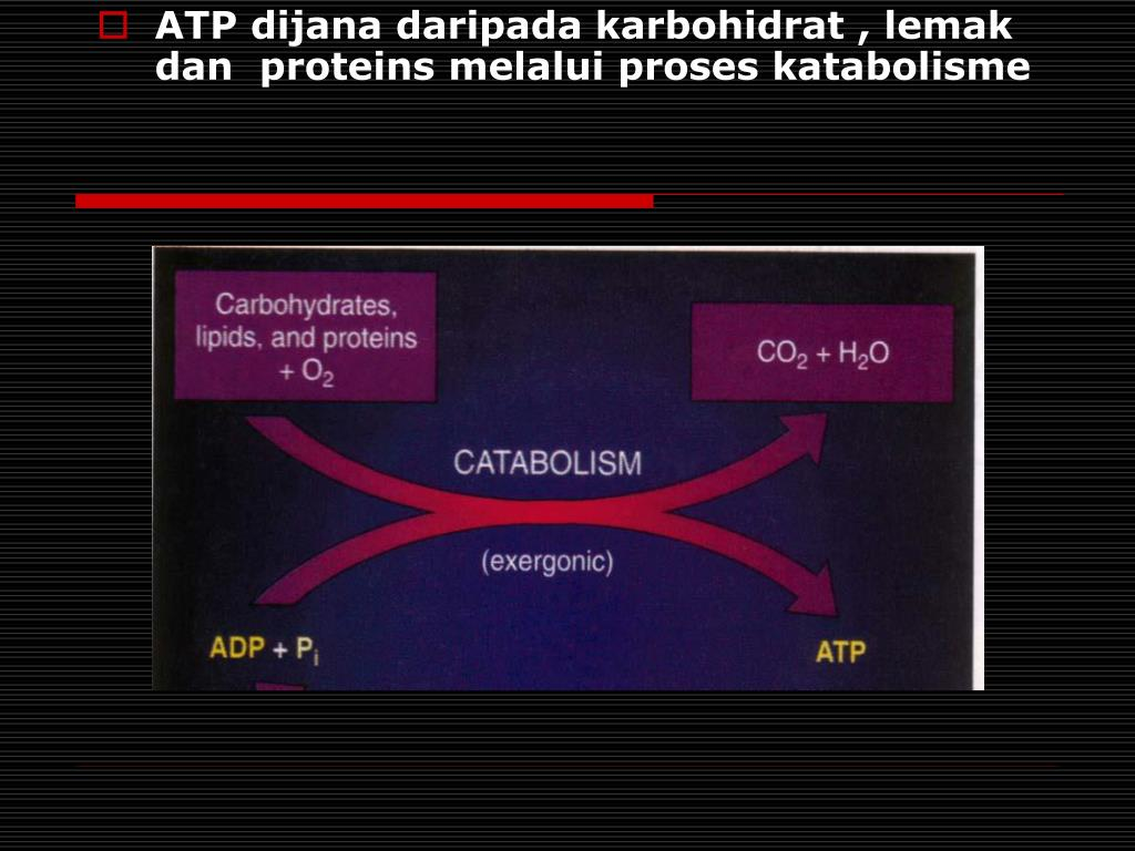 ATP dijana daripada karbohidrat , lemak dan  proteins melalui proses katabolisme
