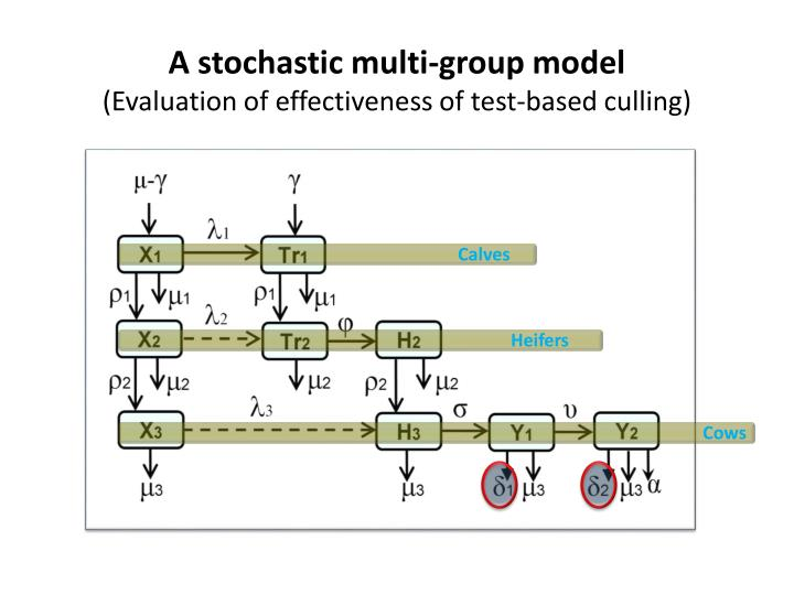 A stochastic multi-group model