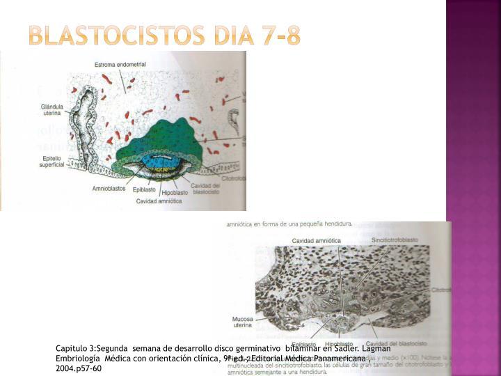 BLASTOCISTOS DIA 7-8