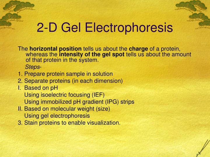 2-D Gel Electrophoresis