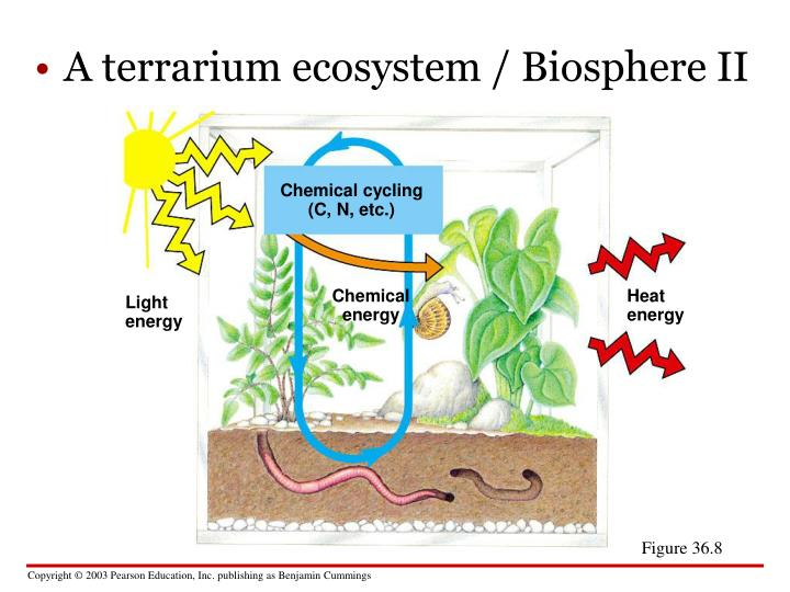 human impacts on the carbon nitrogen Start studying nutrient cycles - carbon, water, nitrogen, phosphorus learn vocabulary, terms, and more with flashcards,  how do humans impact the carbon cycle.