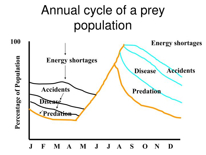 Annual cycle of a prey population