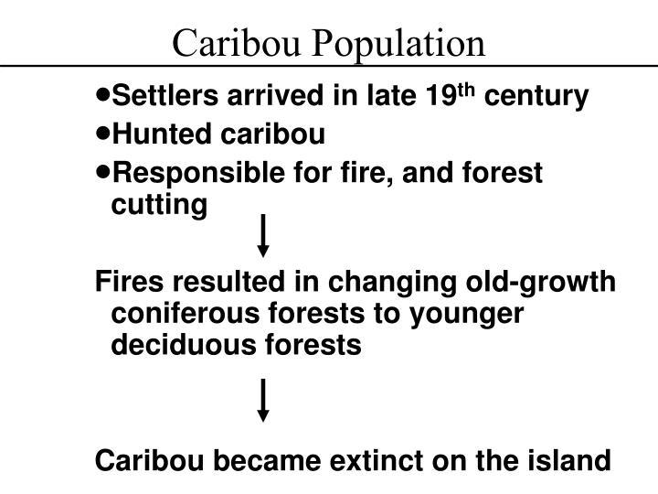 Caribou Population