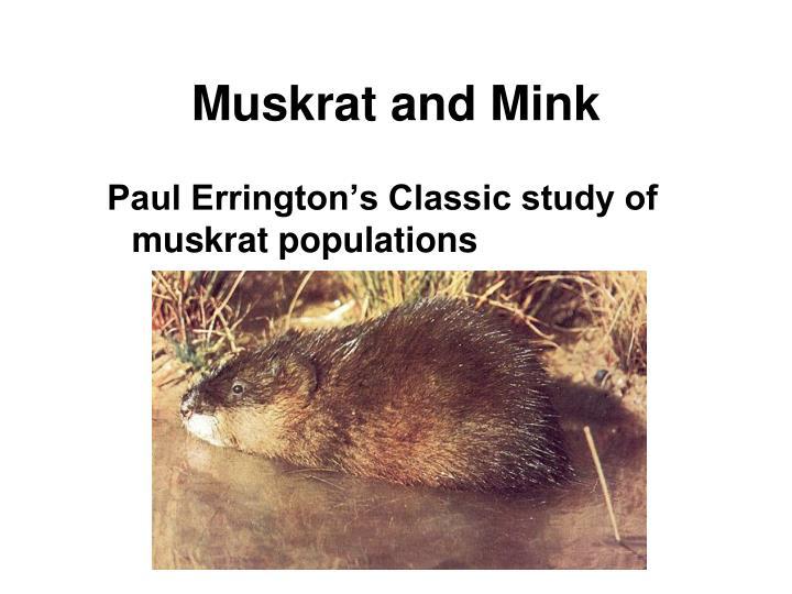 Muskrat and Mink