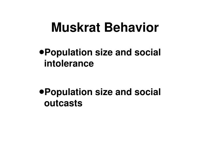 Muskrat Behavior