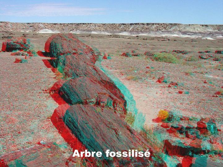 Arbre fossilisé