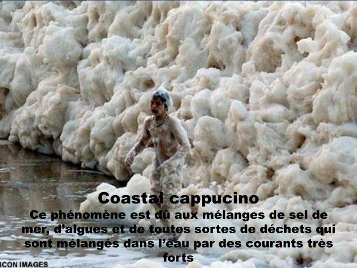 Coastal cappucino
