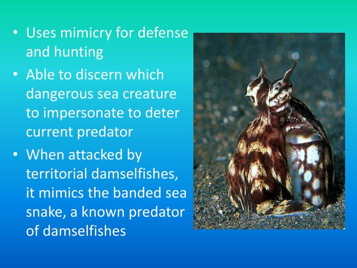 Uses mimicry for defense and hunting