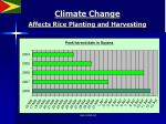 climate change affects rice planting and harvesting