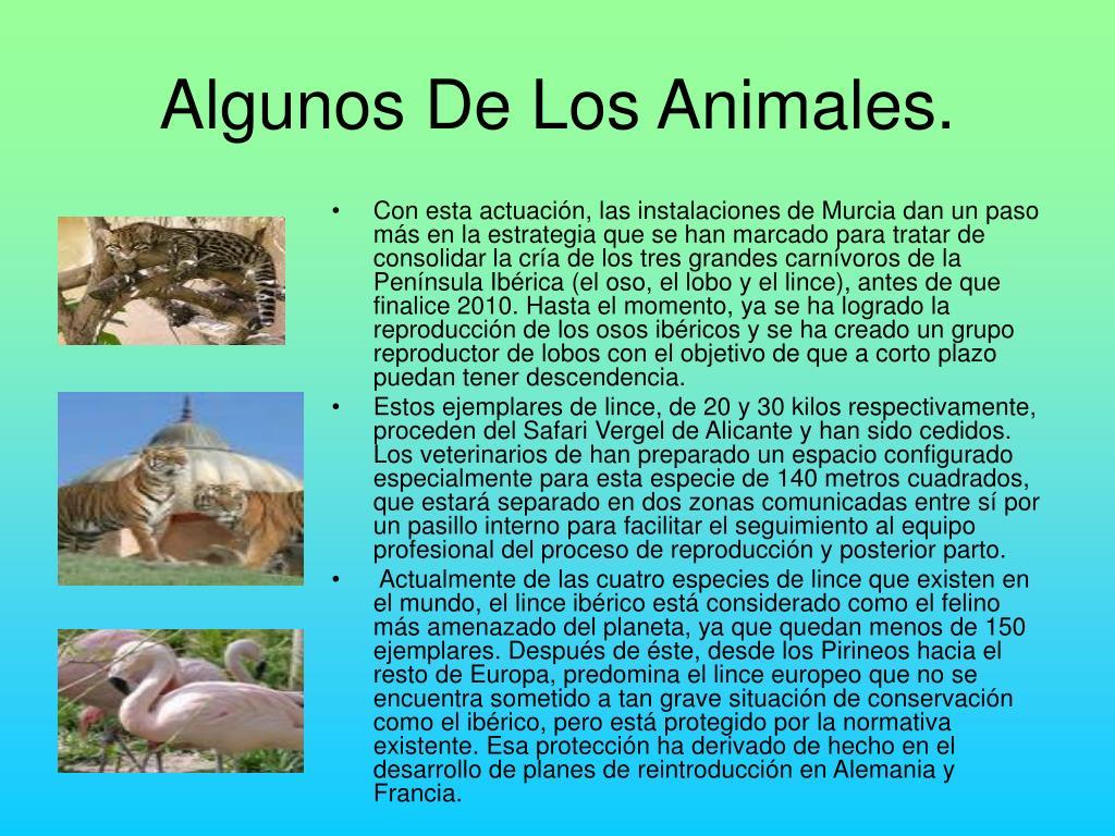Algunos De Los Animales.