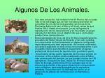 algunos de los animales