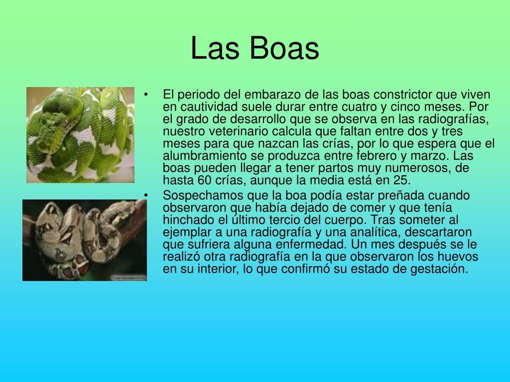 Las Boas