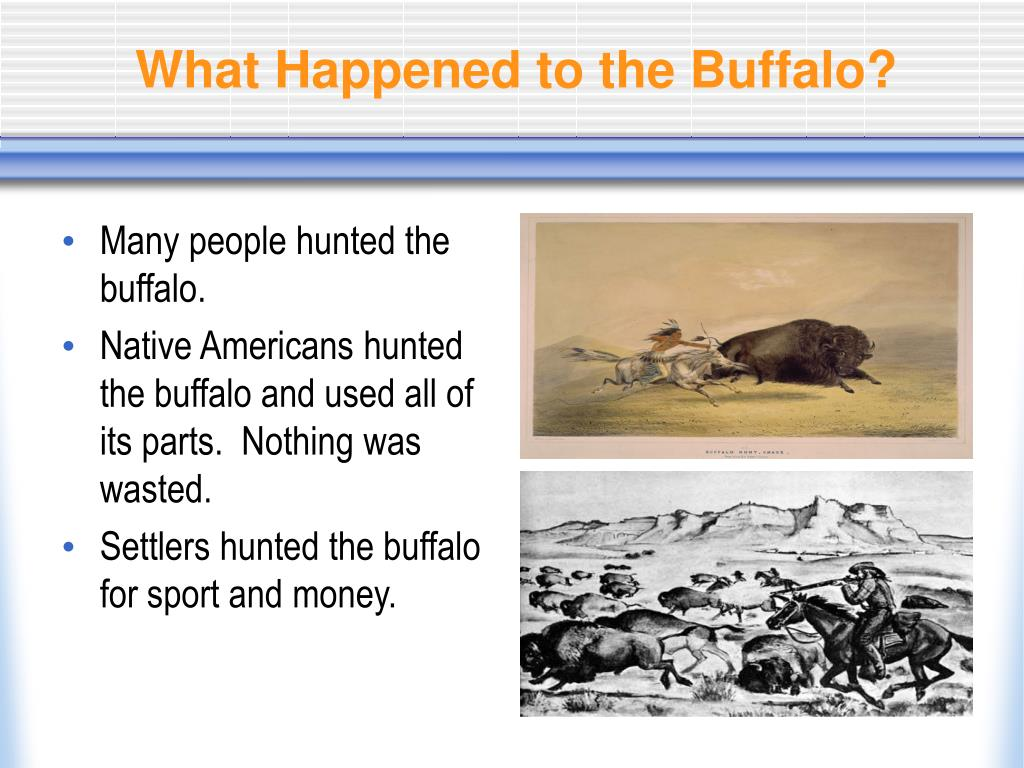 What Happened to the Buffalo?