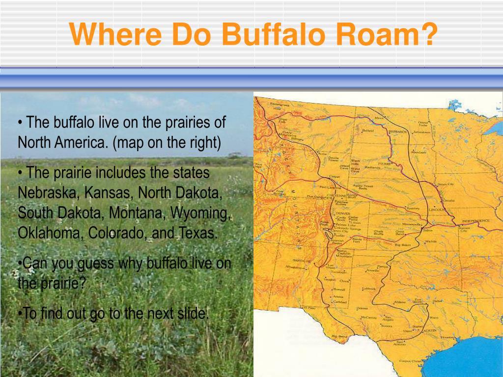 Where Do Buffalo Roam?