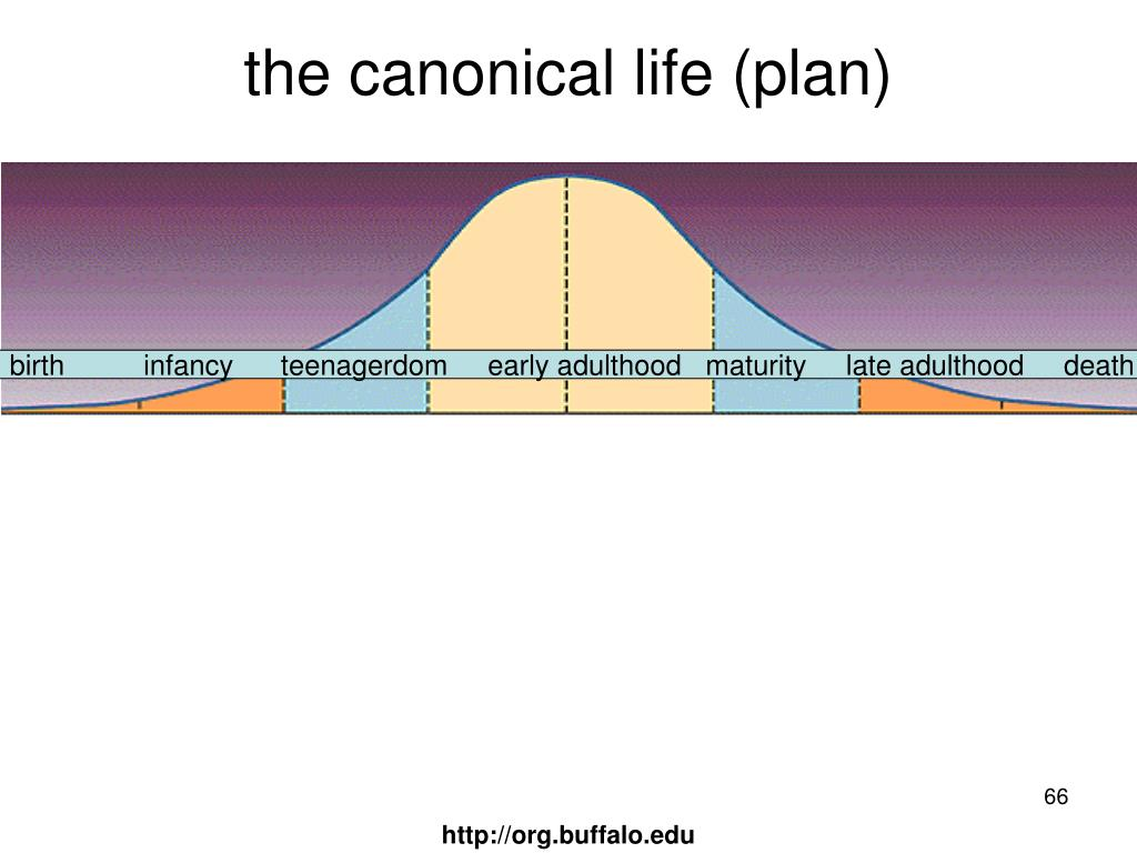 the canonical life (plan)