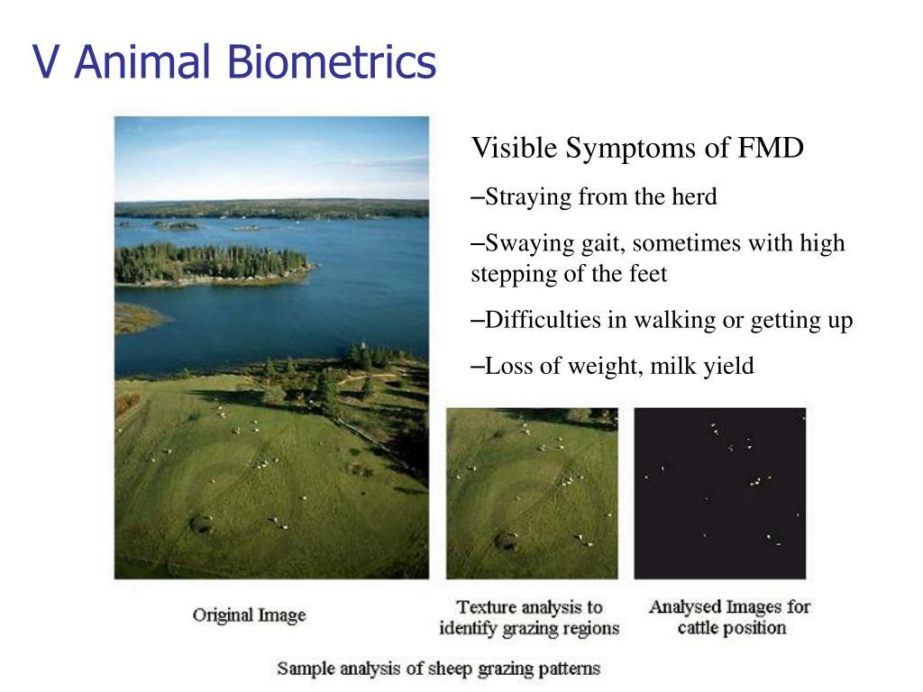 V Animal Biometrics