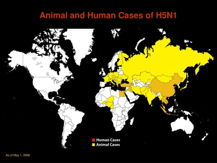 Animal and Human Cases of H5N1