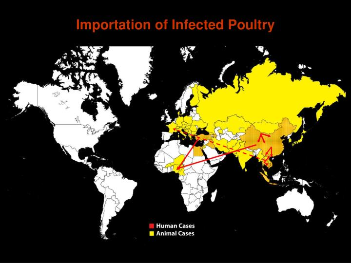 Importation of Infected Poultry
