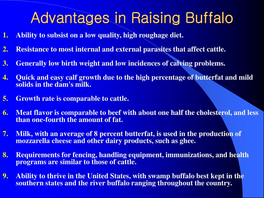 Advantages in Raising Buffalo