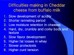 difficulties making in cheddar cheese from buffalo milk