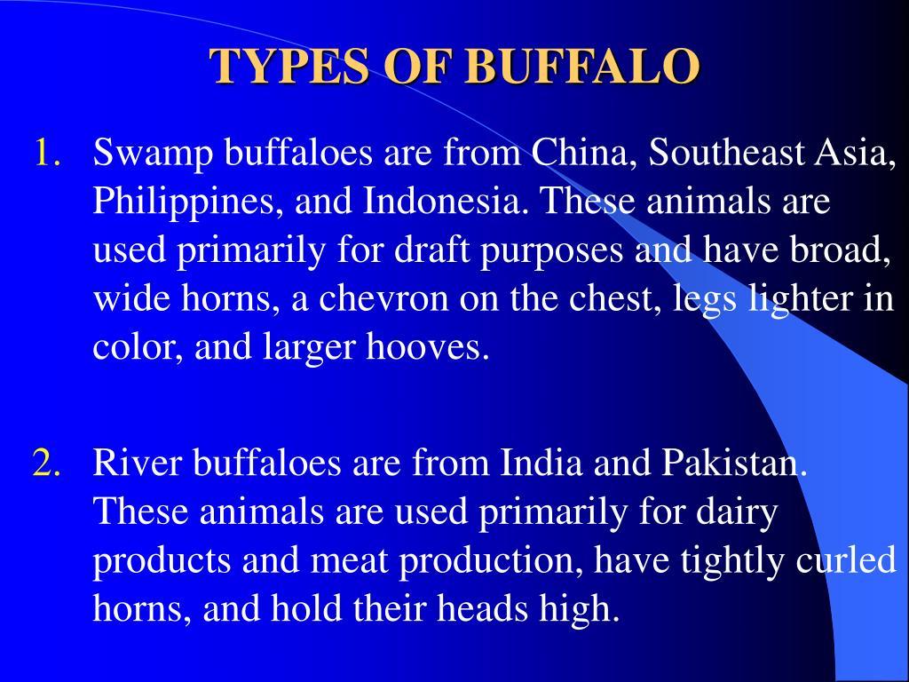 TYPES OF BUFFALO