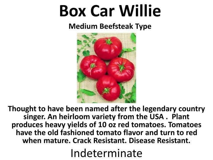 Box Car Willie