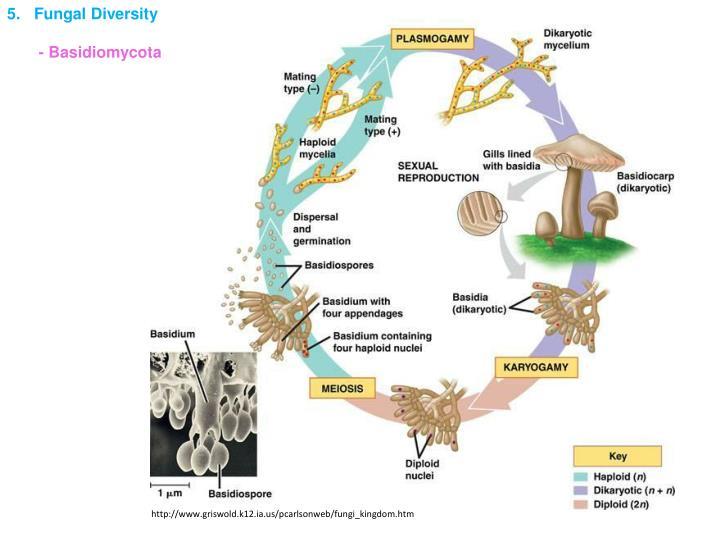 5.   Fungal Diversity