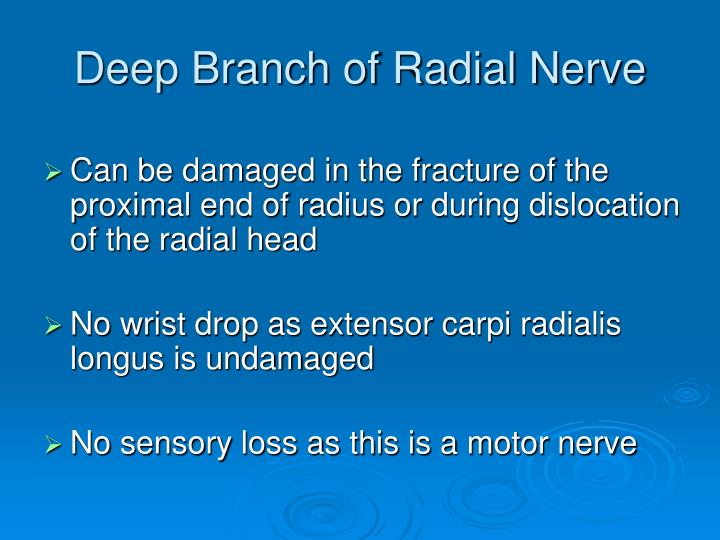 Deep Branch of Radial Nerve