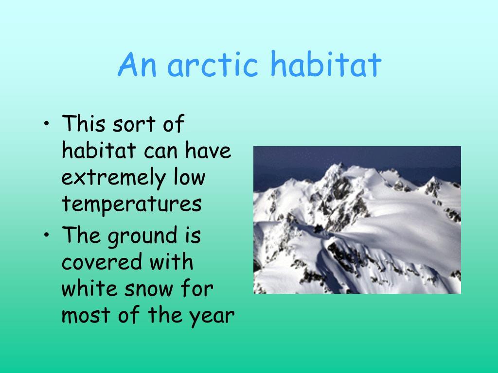 An arctic habitat