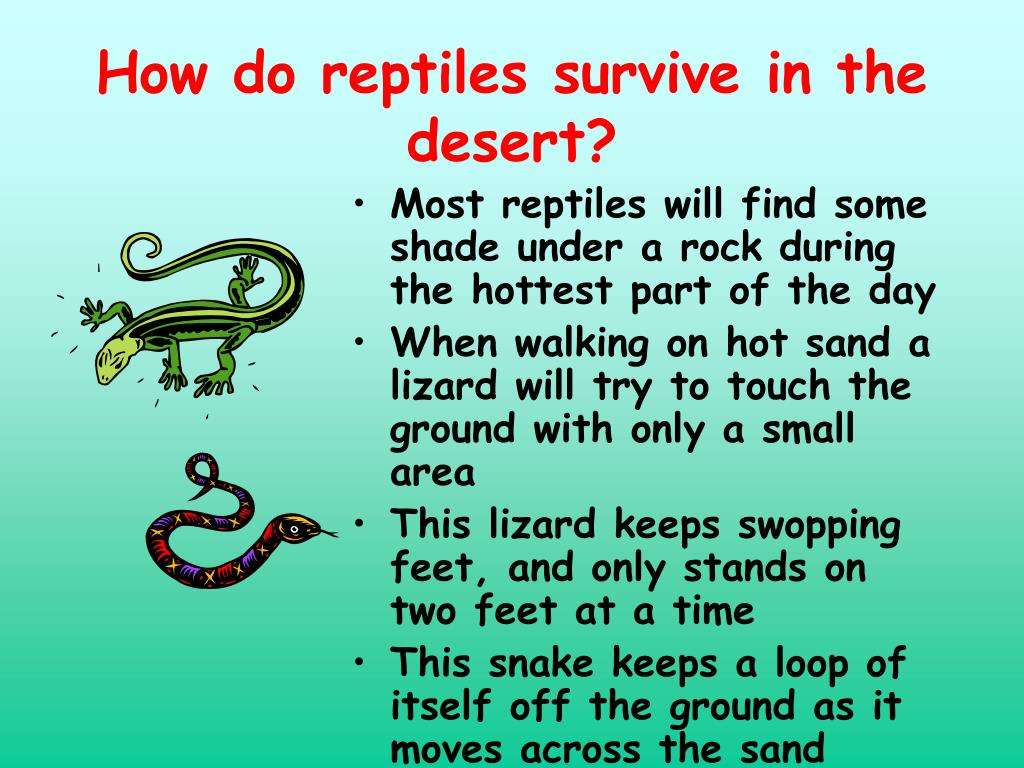 How do reptiles survive in the desert?