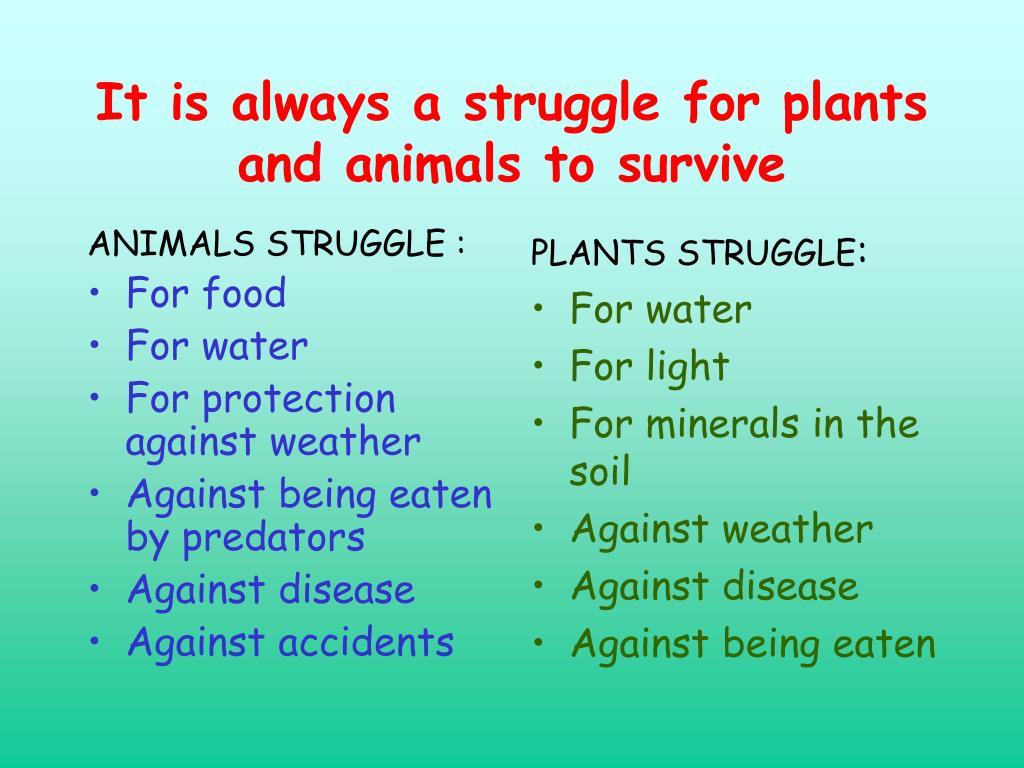 ANIMALS STRUGGLE :