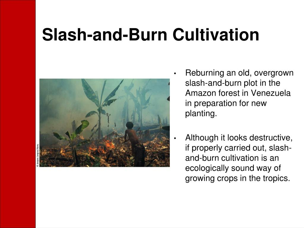 Slash-and-Burn Cultivation