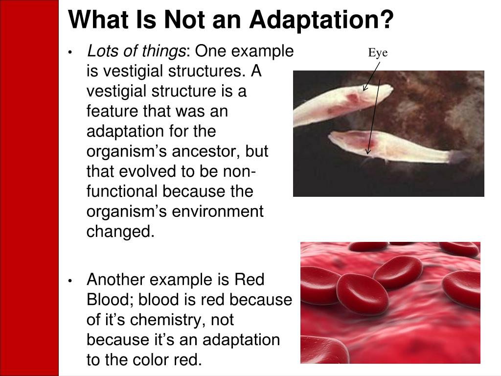 What Is Not an Adaptation?