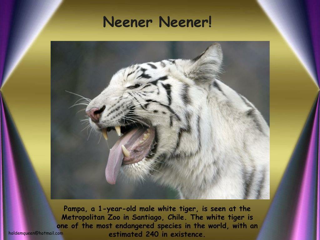 Neener Neener!