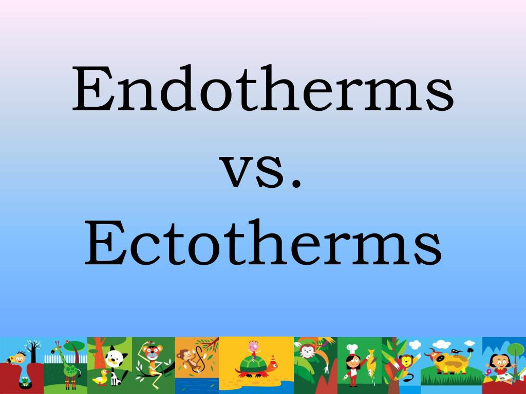 Endotherms vs. Ectotherms