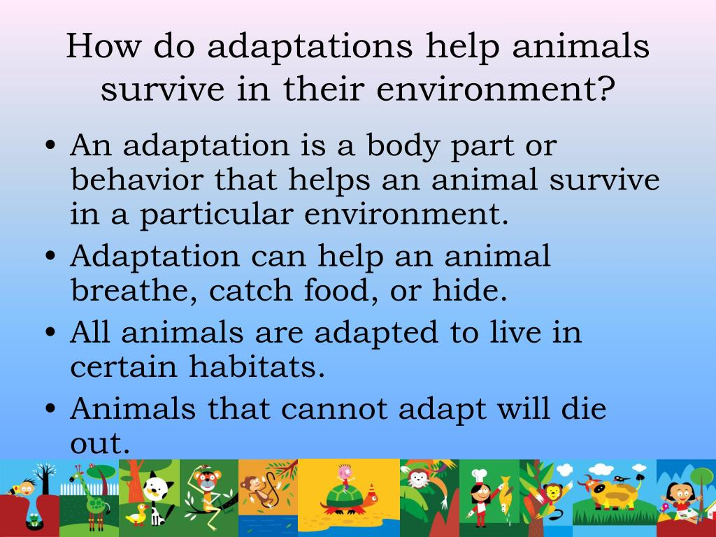 How do adaptations help animals survive in their environment?