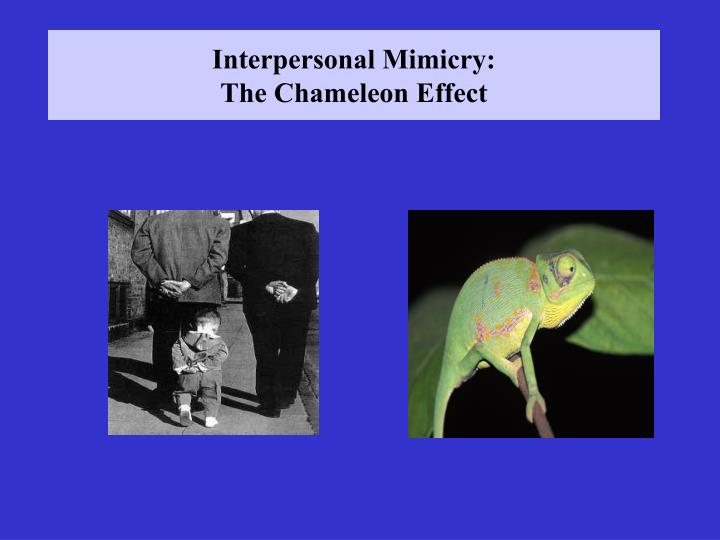 Interpersonal mimicry the chameleon effect