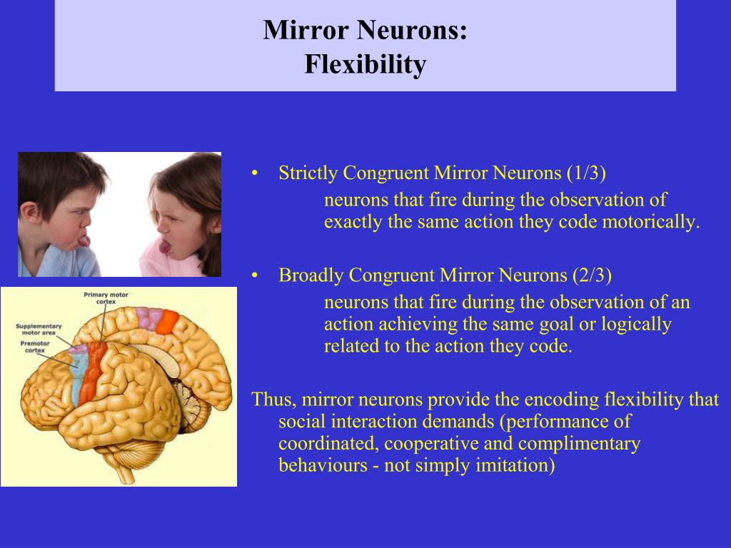 Mirror Neurons: