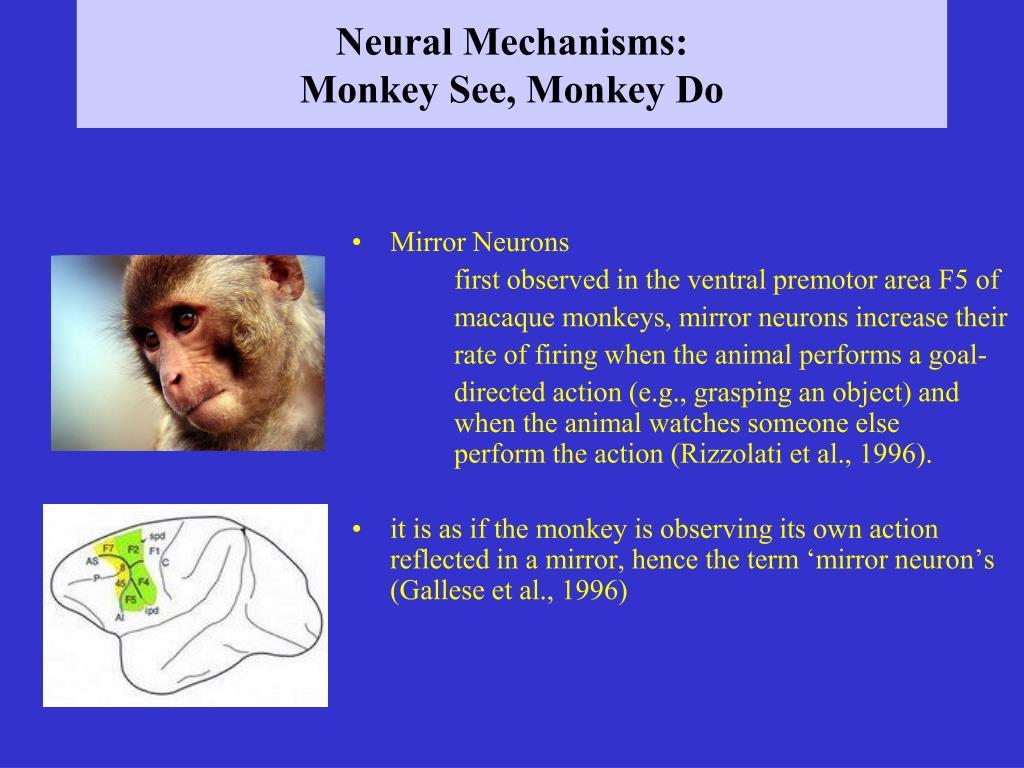 Neural Mechanisms: