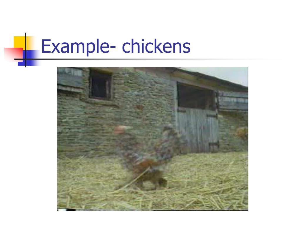 Example- chickens