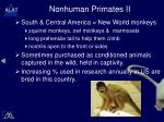 nonhuman primates ii