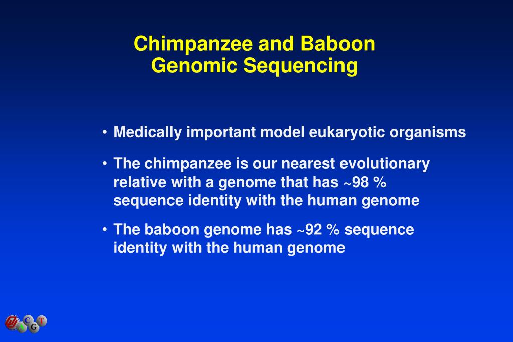 Chimpanzee and Baboon Genomic Sequencing