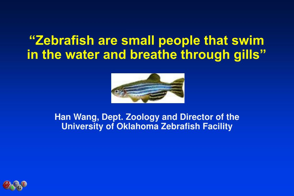 """Zebrafish are small people that swim in the water and breathe through gills"""