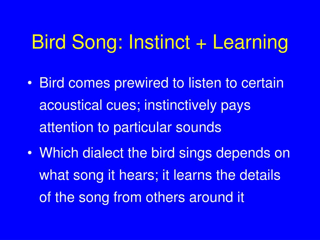 Bird Song: Instinct + Learning