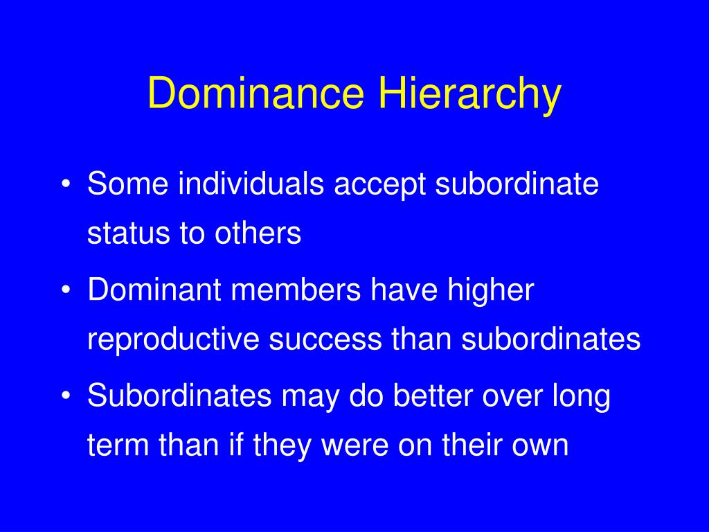 Dominance Hierarchy