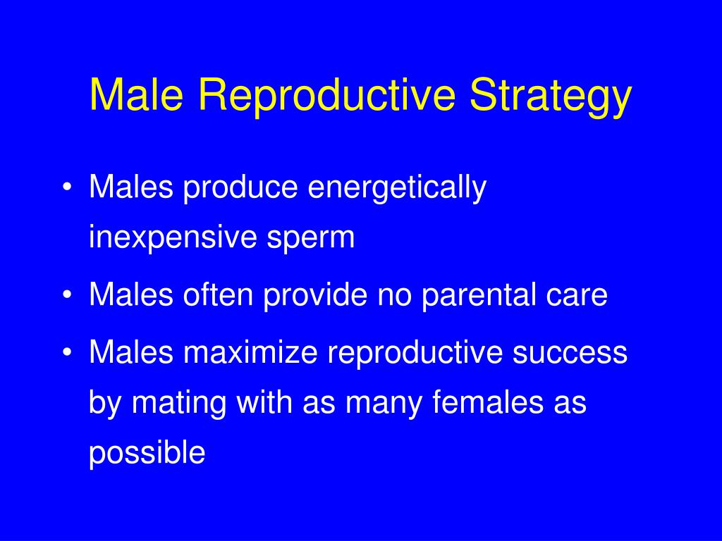 Male Reproductive Strategy