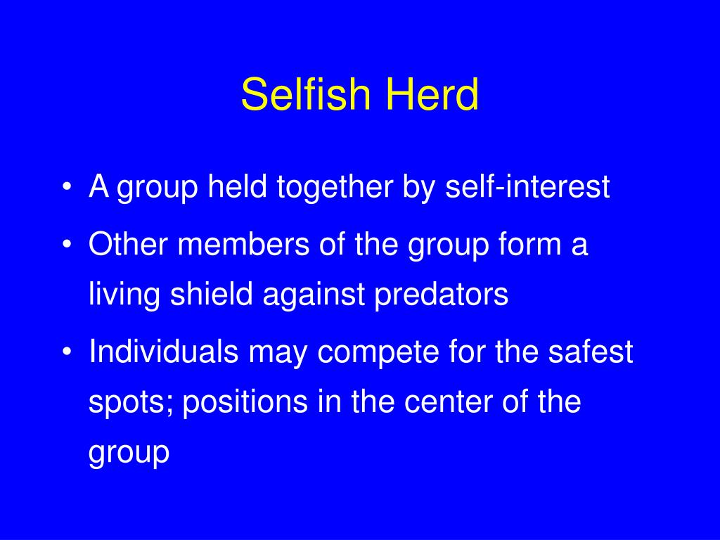 Selfish Herd