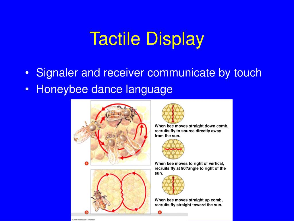 Tactile Display