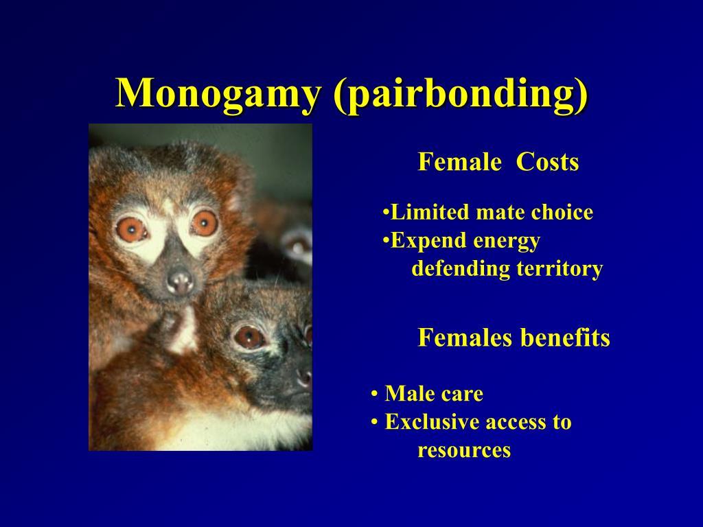Monogamy (pairbonding)