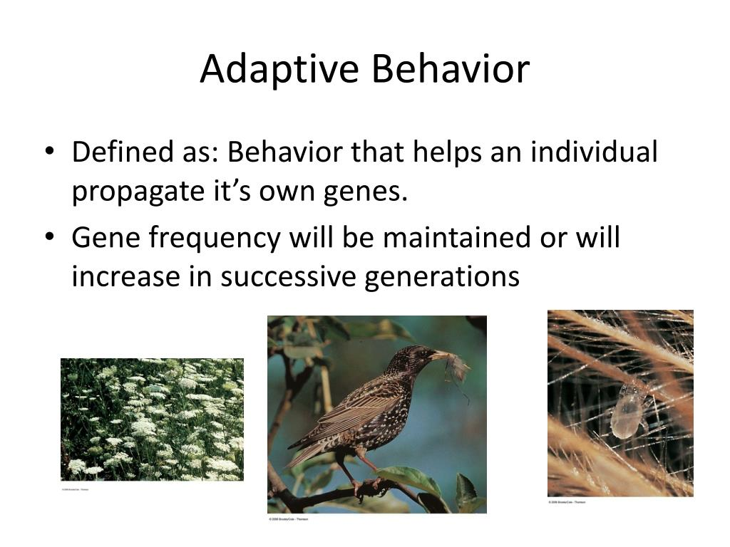Adaptive Behavior